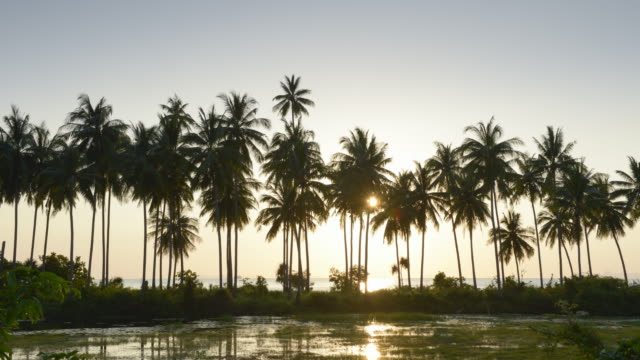 TL / Day to Night / Sunset at the sea with palm trees