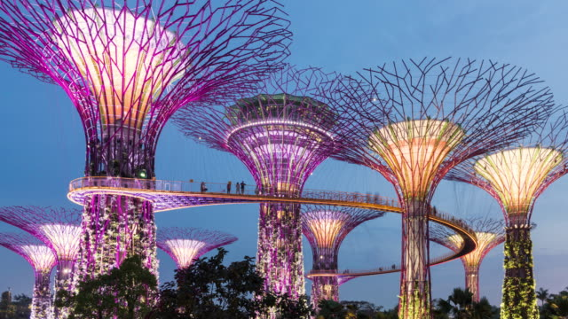 vidéos et rushes de day to night time lapse of supertree grove, marina bay gardens, singapore - singapour