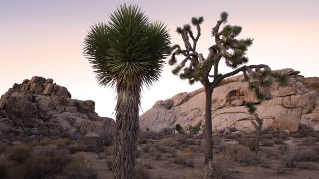 t/l, ds day to night view of rock formations and yucca in joshua tree national park / usa - national park stock videos & royalty-free footage