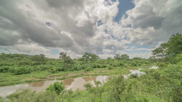 vidéos et rushes de timelapse diurne de la nature dans le parc national kruger en afrique du sud avec des nuages - parc national