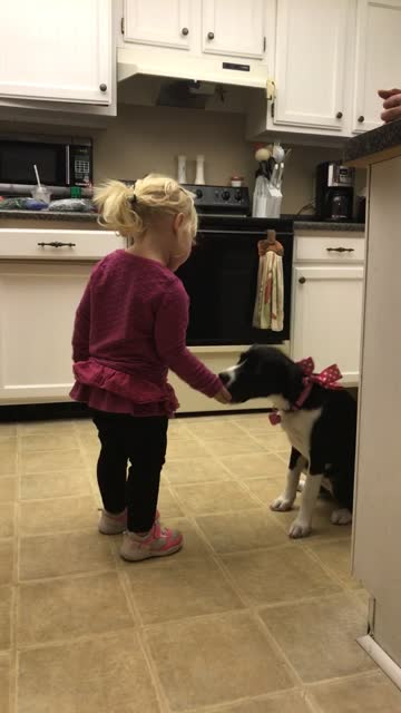 stockvideo's en b-roll-footage met dazy may is so smart as she listens to a 2-year-old give commands for a treat. enjoy! - genomen met mobiel apparaat