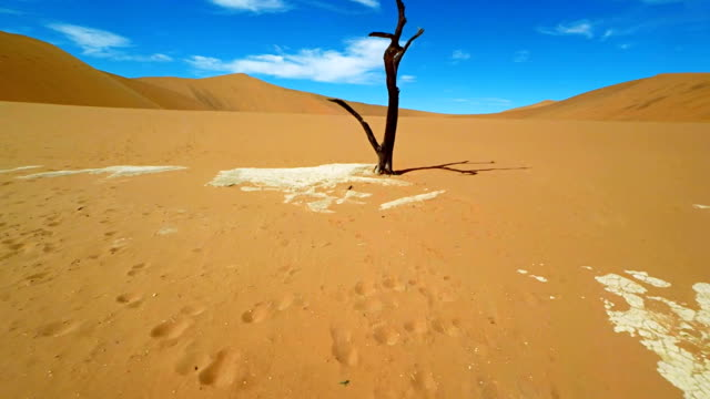 heli dead acacia tree in deadvlei - multicopter stock videos & royalty-free footage