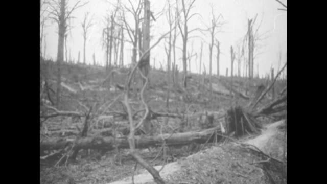 pan dead and dying trees around german trenches captured by the allies in fay france / vs french soldiers walking and standing front of dugout / ms... - esercito militare francese video stock e b–roll