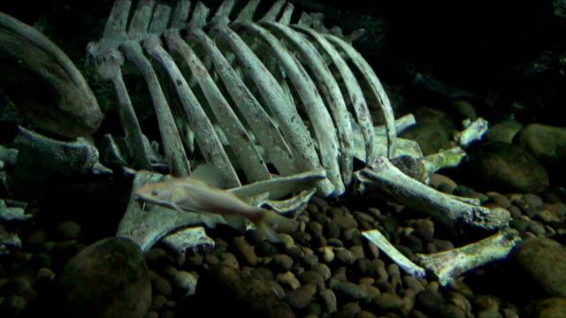 dead animal - invertebrate stock videos & royalty-free footage