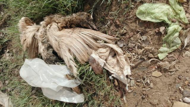 胃のプラスチック汚染を伴う死んだ鳥 - 使い捨て製品点の映像素材/bロール
