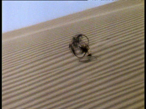 dead birdcage plants rolls like tumbleweed over desert sand dunes, namibia - steamroller stock videos and b-roll footage