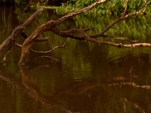 Dead branches reflected in billabong