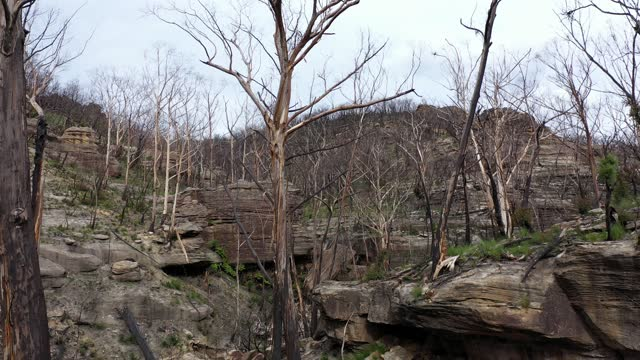 dead burnt trees after forest fire in canyon, mountain stream, rocky cliffs - ridge stock videos & royalty-free footage