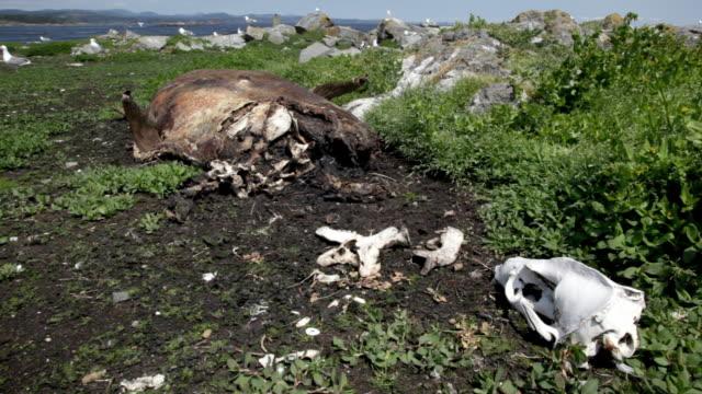 dead california sea lion - カナダ ビクトリア市点の映像素材/bロール