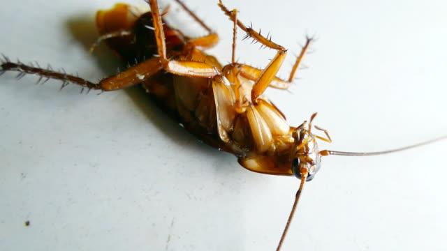 döda kackerlacka - skadedjur bildbanksvideor och videomaterial från bakom kulisserna