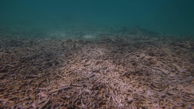 dead coral reef by global warming - ecosystem stock videos & royalty-free footage