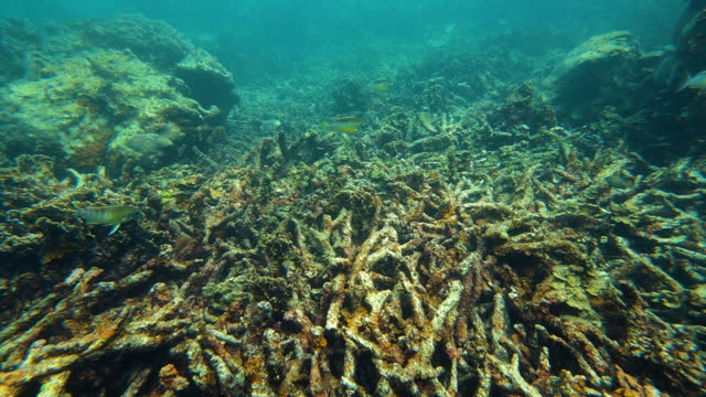 dead coral reef by global warming - damaged stock videos & royalty-free footage