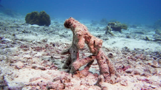 dead coral reef with coral bleaching due to climate change - destruction stock videos & royalty-free footage