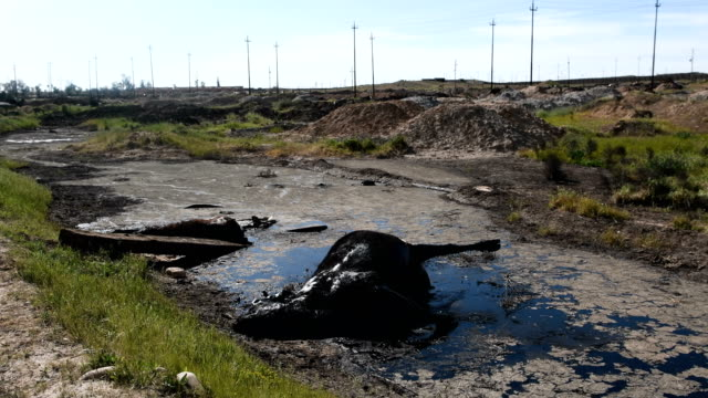 Dead cows lie in a pool of oil in an oil refinery destroyed by retreating Islamic State fighters at the beginning of the Mosul offensive Iraqi forces...