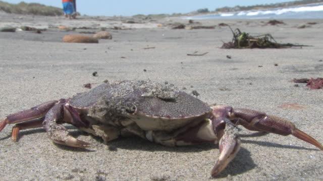 Dead Krabben-HD-bis 30