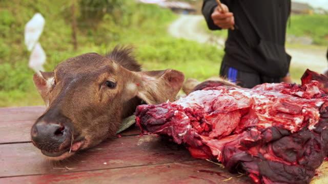 dead elk deer animal on roadside butcher table - decapitated stock videos & royalty-free footage