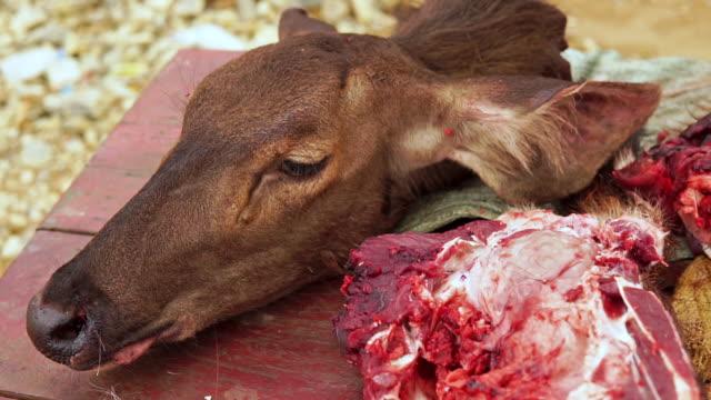 Dead Elk Deer animal on roadside butcher table