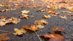 CLOSE UP: Dead fallen tree leaves laying on wet road after rain in late autumn
