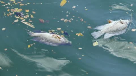 vídeos y material grabado en eventos de stock de dead peces en aguas residuales - contaminación de aguas