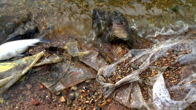dead fish in polluted water - accidents and disasters stock videos and b-roll footage