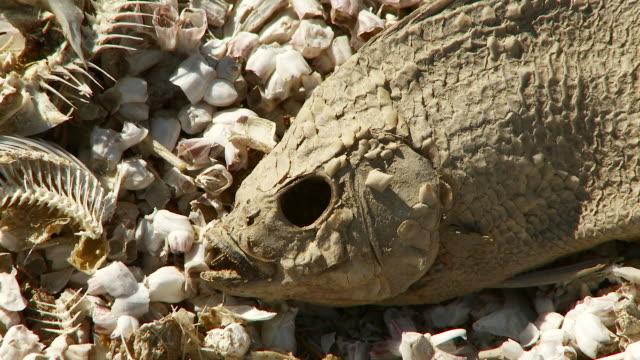 dead fish - 死んでいる動物点の映像素材/bロール