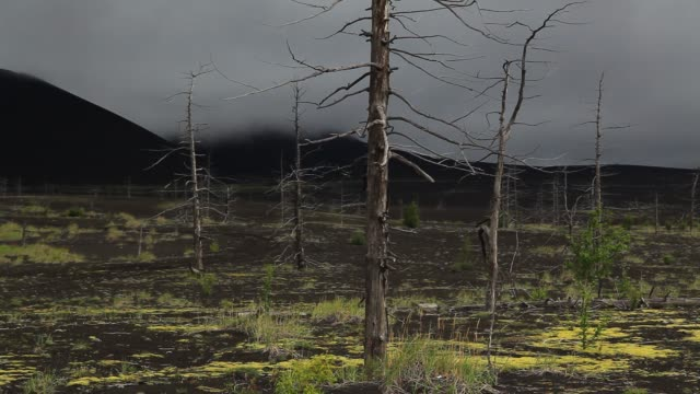 dead forest, volcano tolbachik, kamchatka - bare tree stock videos & royalty-free footage