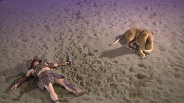 vidéos et rushes de a dead gladiator lies on the sand near a resting lion. - gladiateur