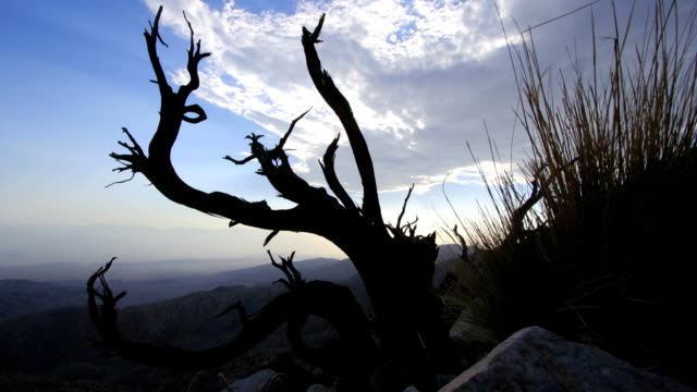 dead juniper bush time lapse and coachella valley - palm springs california stock videos & royalty-free footage