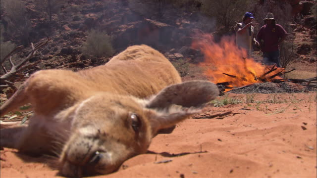 CU R/F Dead kangaroo on sand, two men in distance standing near fire, Rainbow Valley, Northern Territory, Australia