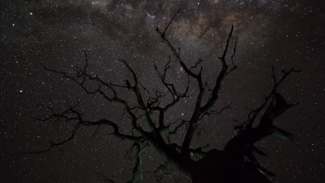 a dead leadwood tree silhouetted against the night sky - astronomy stock videos & royalty-free footage