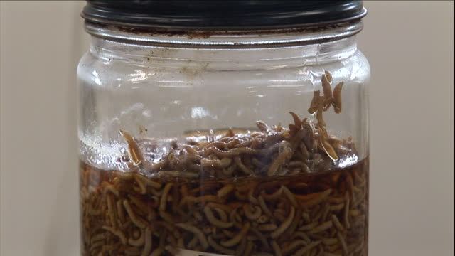 dead maggots fill a glass jar labeled with a case number. - kriminaltechnik stock-videos und b-roll-filmmaterial