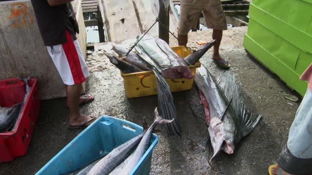 vídeos de stock, filmes e b-roll de ms dead marlin being weight at jetty / semporna, sabah, malaysia    - contéiner de plástico