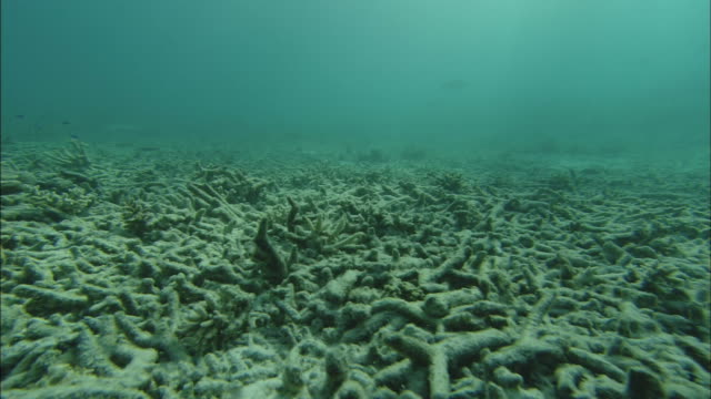 dead or dying coral covers the ocean floor along the great barrier reef. - coral stock videos & royalty-free footage