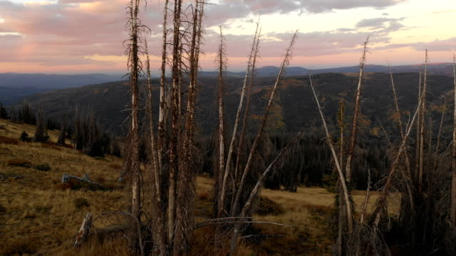 dead pines on top of mountain at sunset - named wilderness area stock videos & royalty-free footage