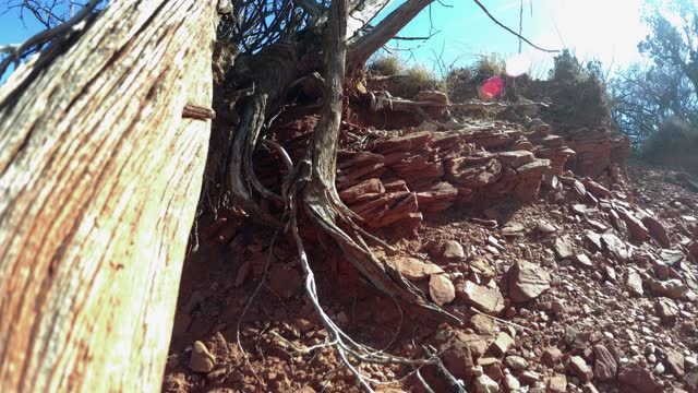 dead sage wood in the desert landscape - sharp stock videos & royalty-free footage