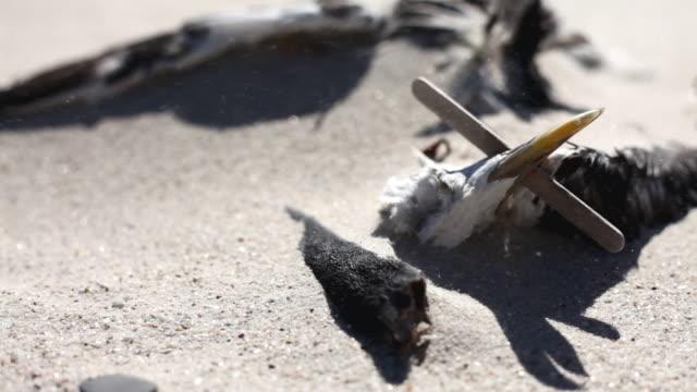 Dead Möwe am Strand