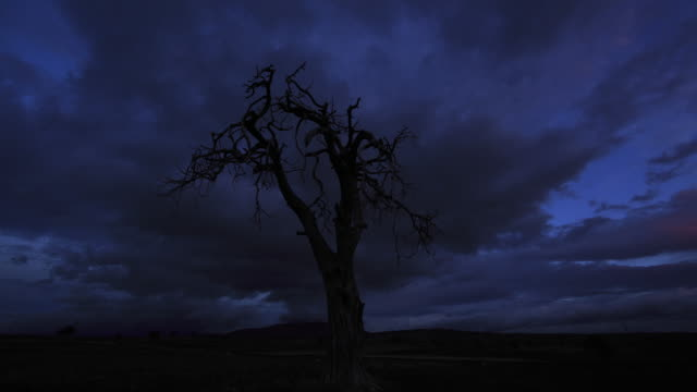 dead tree and cloudscape in early morning - bare tree stock videos & royalty-free footage