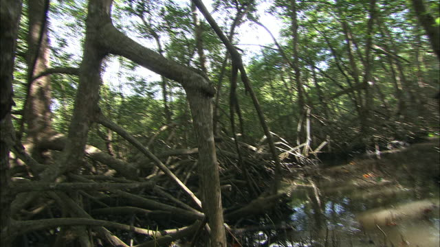 dead tree branches litter the sides of a wooded marshy path. - marsh stock videos & royalty-free footage