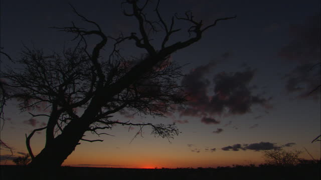 a dead tree casts a silhouette against a sunset horizon. - western cape province stock videos & royalty-free footage