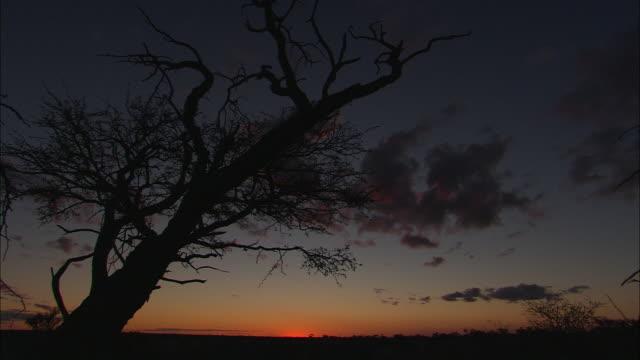 vídeos y material grabado en eventos de stock de a dead tree casts a silhouette against a sunset horizon. - provincia occidental del cabo