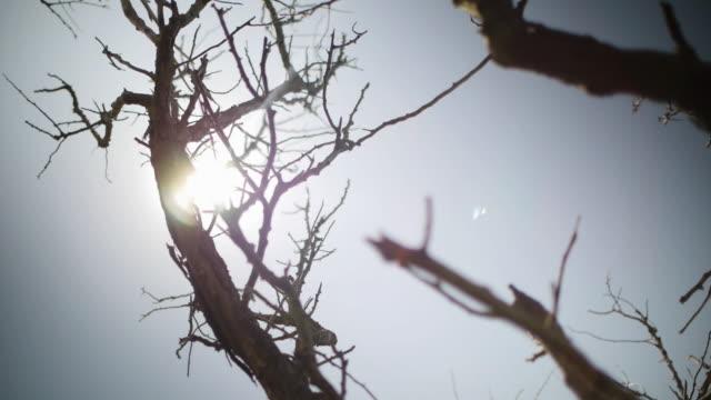dead tree in burning sun in desert - ramo parte della pianta video stock e b–roll