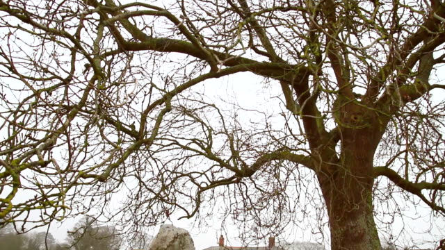 ms td dead tree in front of house / wiltshire, england, united kingdom - wiese stock videos & royalty-free footage