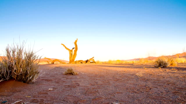 ds ws dead tree in the deadvlei - arid stock videos & royalty-free footage