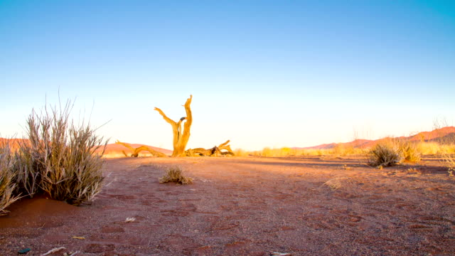 DS WS Dead Tree In The Deadvlei