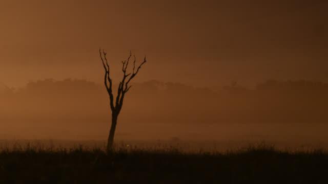 dead tree on savannah in heat haze at sunset, kenya - death stock videos & royalty-free footage