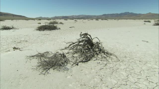 Dead tree roots dot cracked desert sand