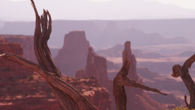 dead tree trunk in scenic canyon landscape, rack focus - canyon stock-videos und b-roll-filmmaterial