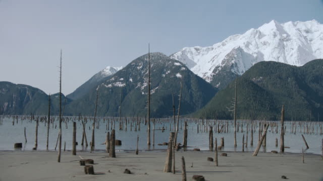 ds dead tree trunks from an exposed sunken forest protruding from the lake and its bank, with snow-capped mountains beyond - cricket stump stock videos & royalty-free footage