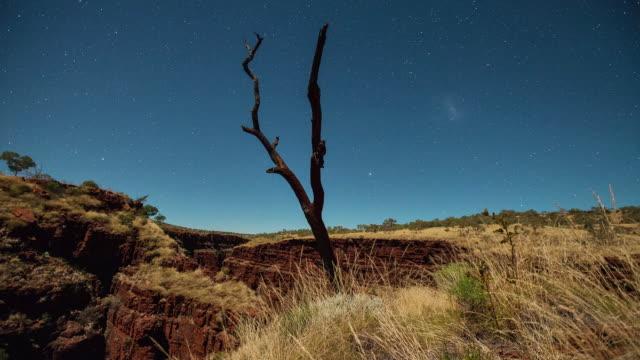 ws t/l ts dead trees and milky way of karijini national park in western australia / australia - heu stock-videos und b-roll-filmmaterial