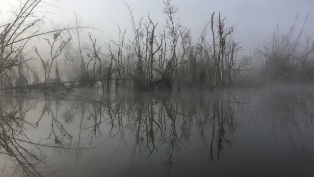 Abgestorbene Bäume sind gespiegelte und neblig im Fluss